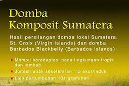 Domba unggul komposit Sumatera hasil persilangan dengan domba lokal Sumatera