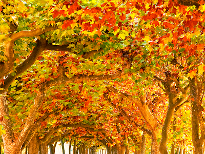 fall leaves and trees