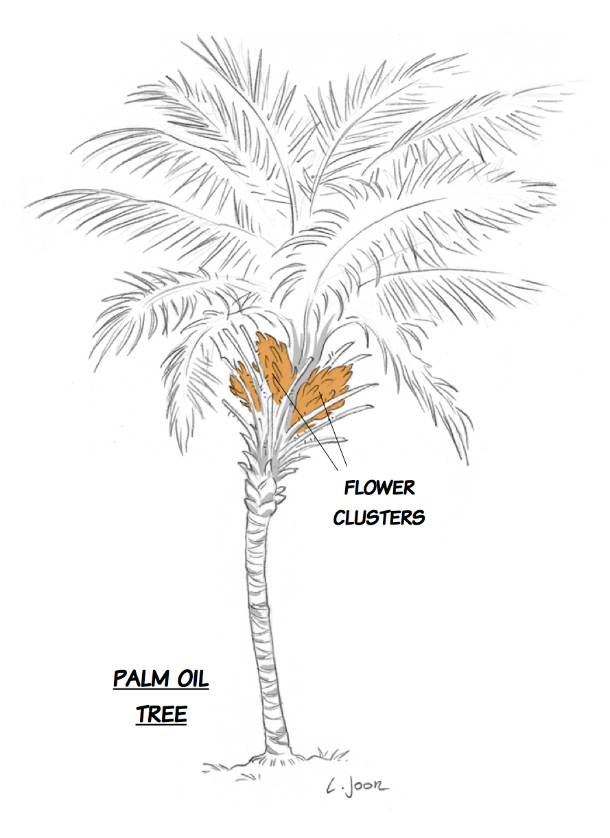 The palm oil tree\'s fruit (or the origin of evil) | Strip Science