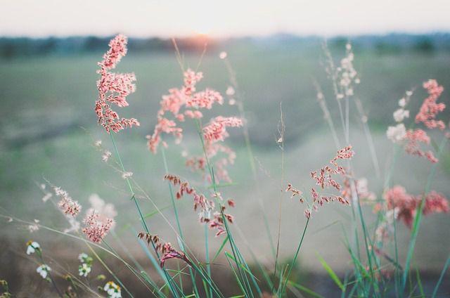 hoa dại đẹp nhất 7