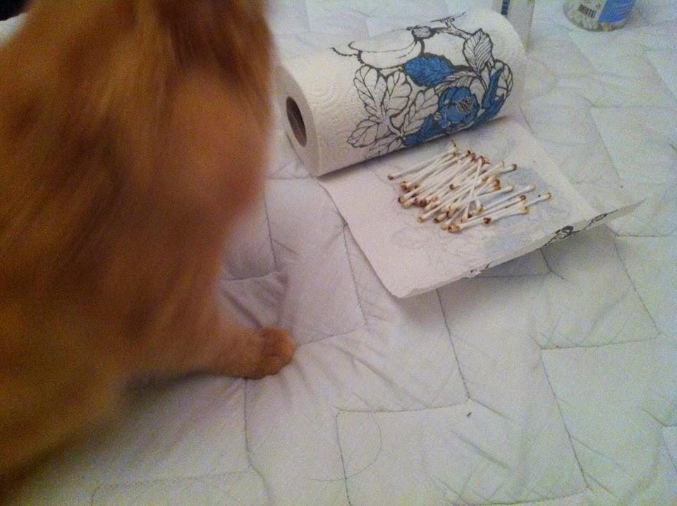 Korvapunkki Kissa