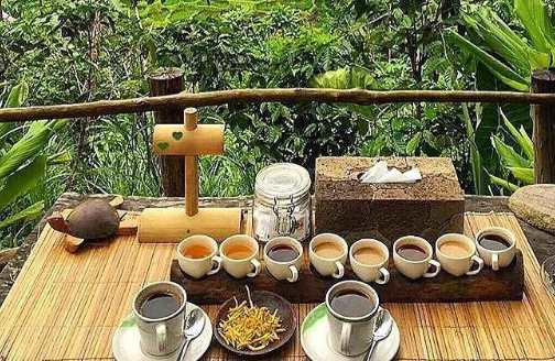 Hasil gambar untuk kopi luwak bali