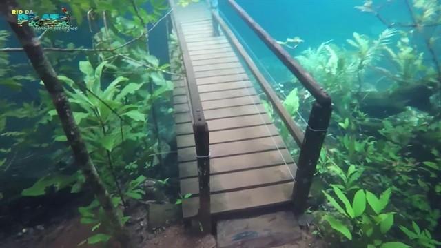 Un increíble fenómeno metereológico permite recorrer un bosque bajo agua cristalina