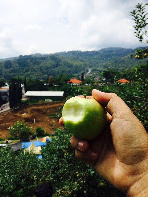 petik apel malang ktma