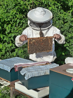 pixabay.com/en/beekeeper-breeding-aflegger-bees