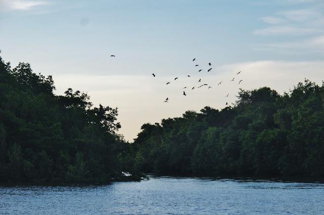 Revoada dos Guarás, em Tutóia, no Delta do Parnaíba