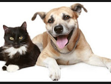 Cat and Dog Rescue