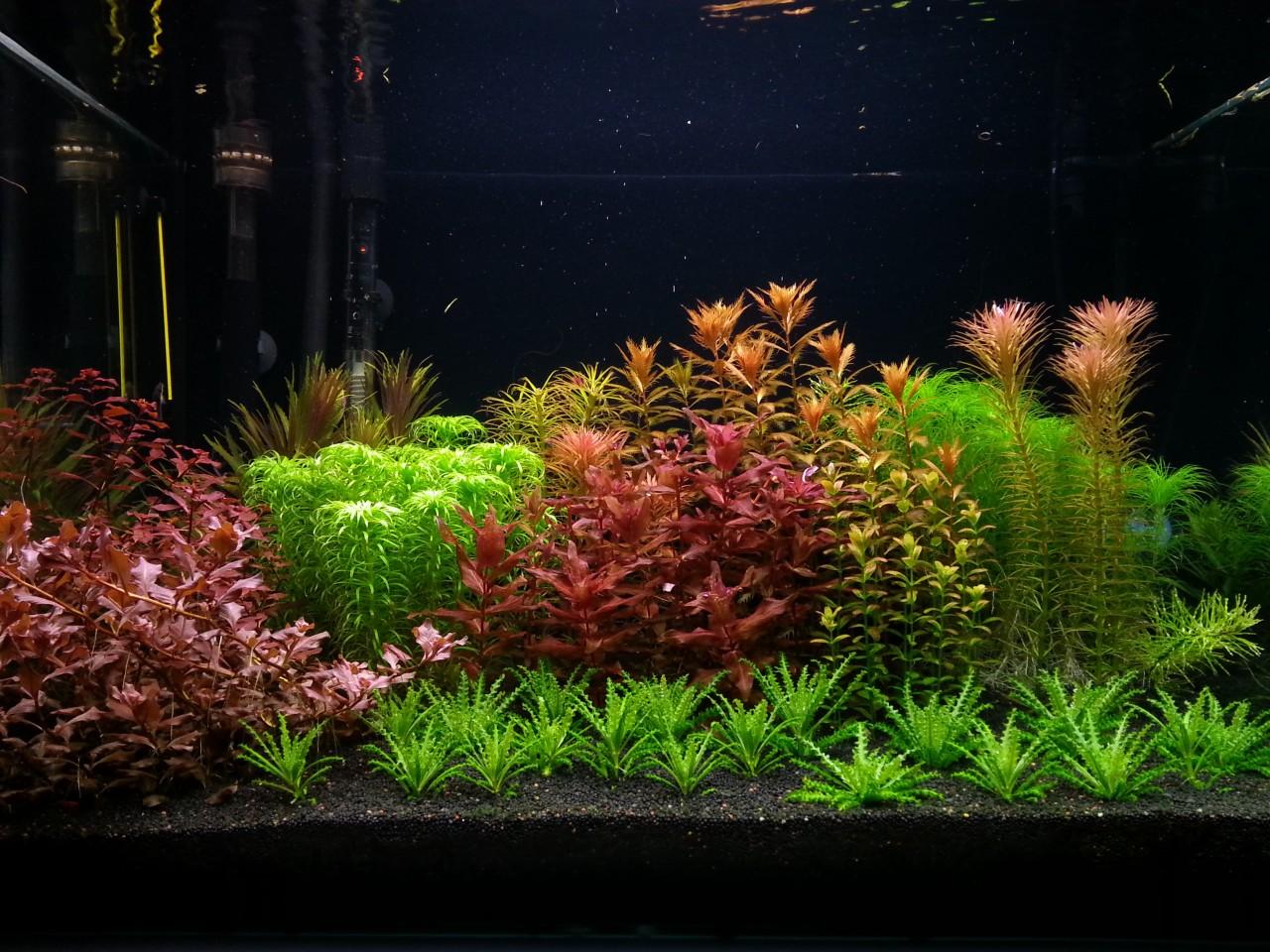 Cây sao nhỏ bên cạnh các cây thủy sinh khác