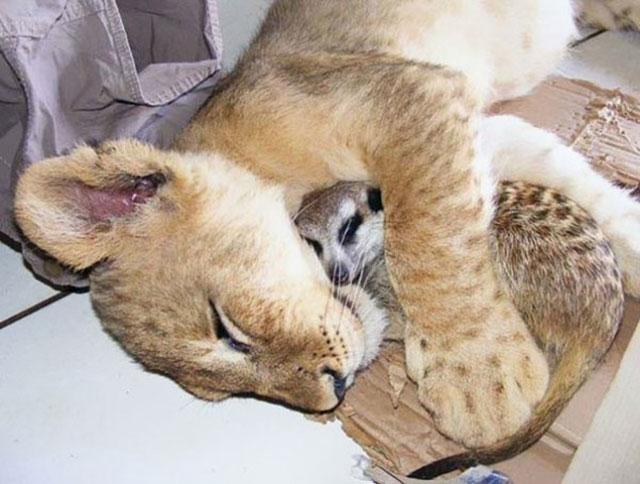 30 pares de animais tirando uma soneca.