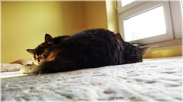 kot nasrał i poszedł spać.