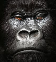 Darwin's God: Evolutionists Gave Me Pushback When I Pointed