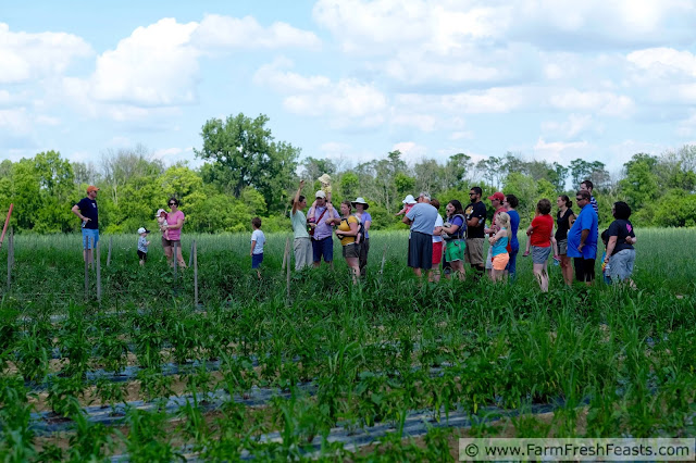 a group of Mile Creek Farm CSA members on a field tour