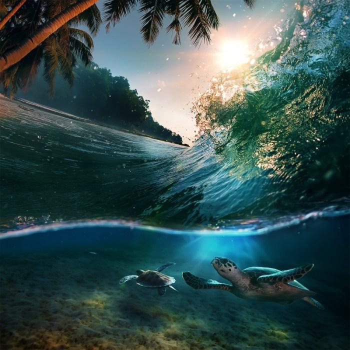 Ilhas Maldivas. Tartarugas por baixo de uma onda