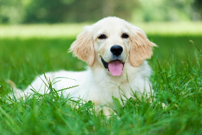 Jak przygotować psa na sezon kleszczowy