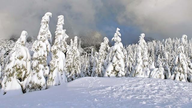 Met sneeuw bedekte bomen