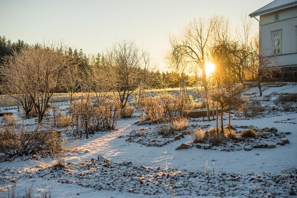 Aamuauringon kajo talvisessa puutarhassa