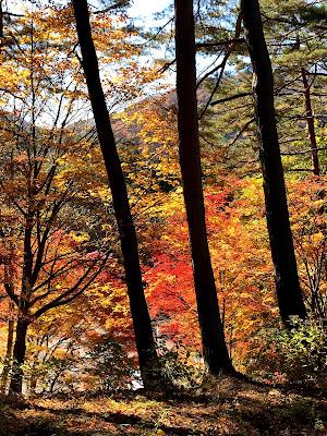 【日帰り吉方位旅行】猪苗代町中ノ沢温泉と土津神社