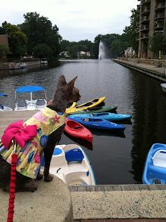 PetSafe® Brand Pet Hydration Month Cat by Lake