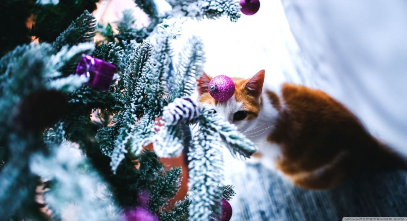 Christmas Cats Hd Wallpaper Dom Wallpapers