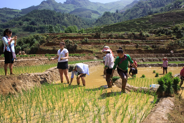 One day working as a farmer in Sapa 2