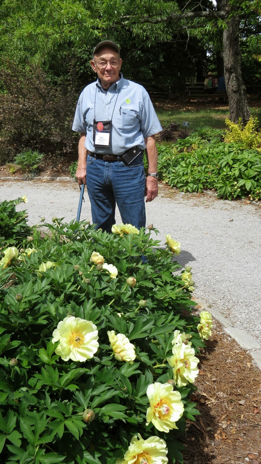 Southern Peony 2015 American Peony Society Yew Dell Gardens Tour