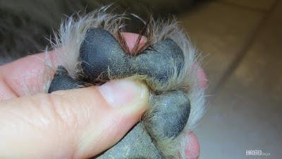 Malibu fused paws