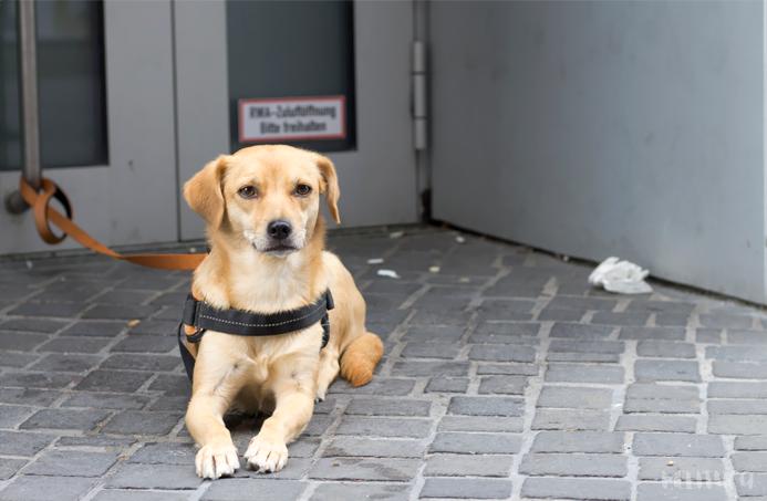 descubriendo berlin fotografía alemania perro