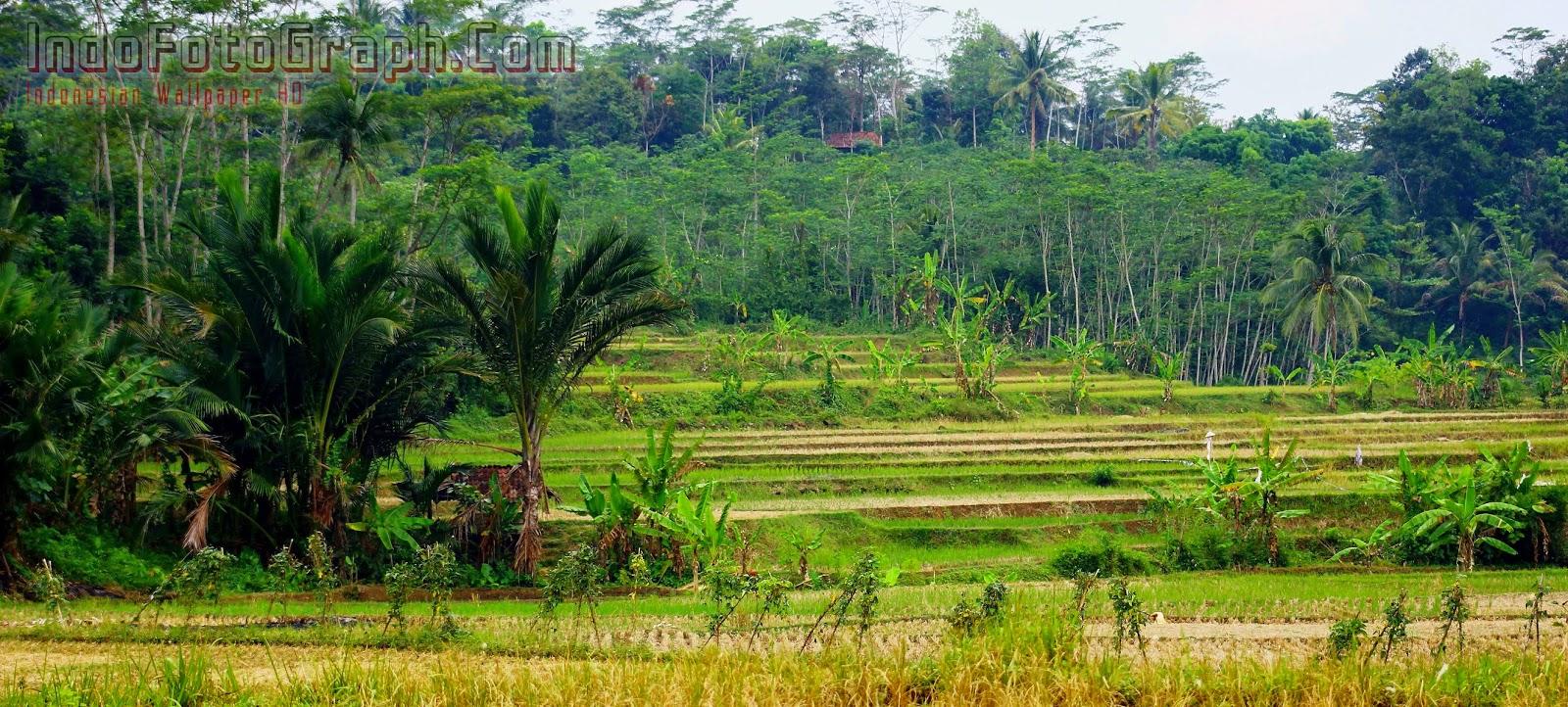 Images Of Wallpaper Alam Pedesaan Pins SC