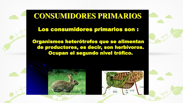 consumidores primarios