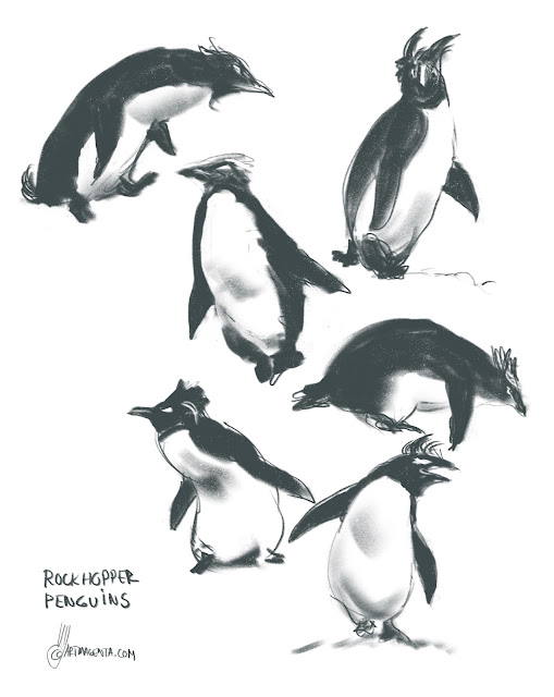 Rockhopper Penguins Bird sketch by Artmagenta
