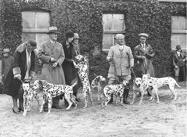 A group of Dalmatians and their owners before the judges, 1920s or 30s, by Sam Hood