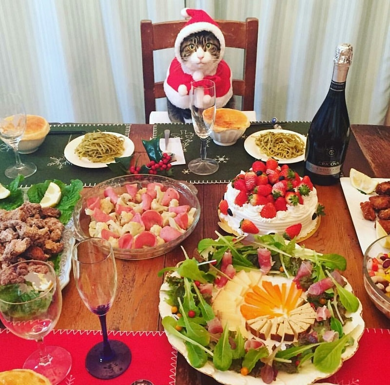 How to Dine the Japanese Way according to this Cute Instagram Cosplay Cat