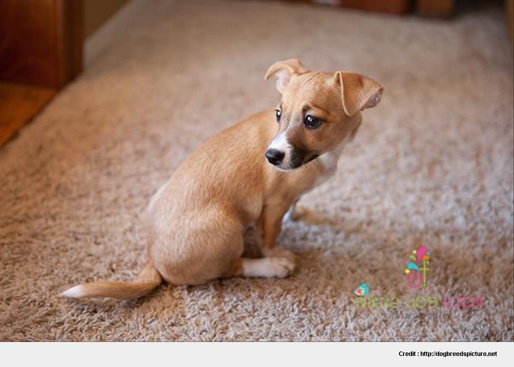 Adopt A Pet Benld Il