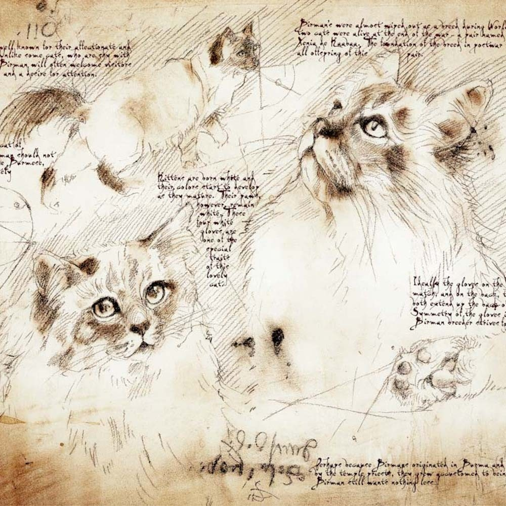 10-Birman-Study-Leonardo-s-Dogs-Cats-and-Dogs-Drawn-in-the-style-of-Leonardo-da-Vinci