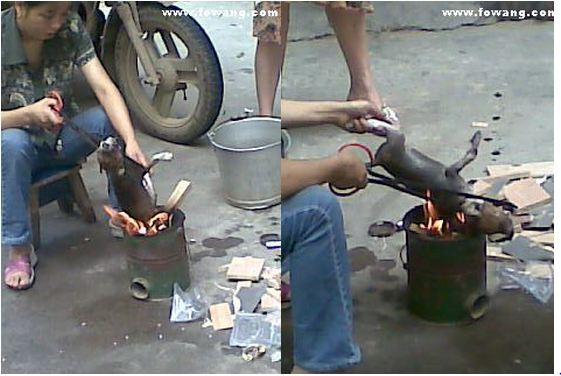 Horrible! Picture of Chinese Lady Roasting a Live Puppy!