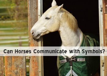 Can Horses Communicate with Symbols?