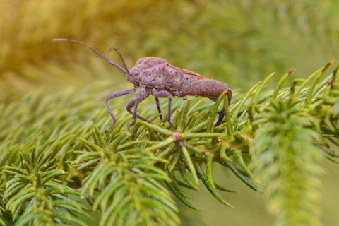 Christmas tree bugs Alpharetta Ga