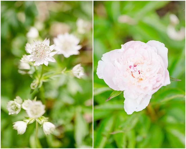 Gartenglück Ende Mai, Pomponetti, Sterndolde und Pfingstrose