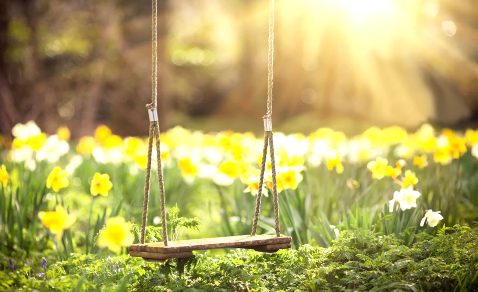 Colorful Swings Abstract Wallpapers HD Wallpapers ID