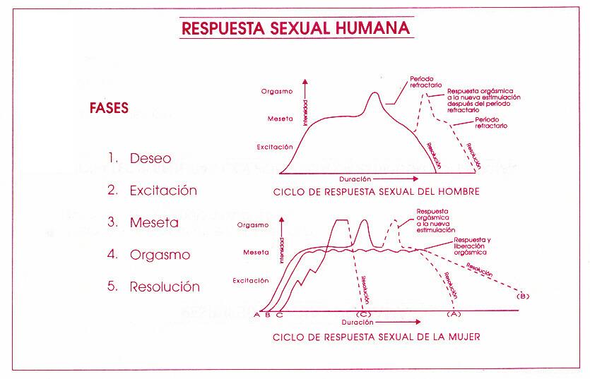 respuesta sexual humana femenina y masculina