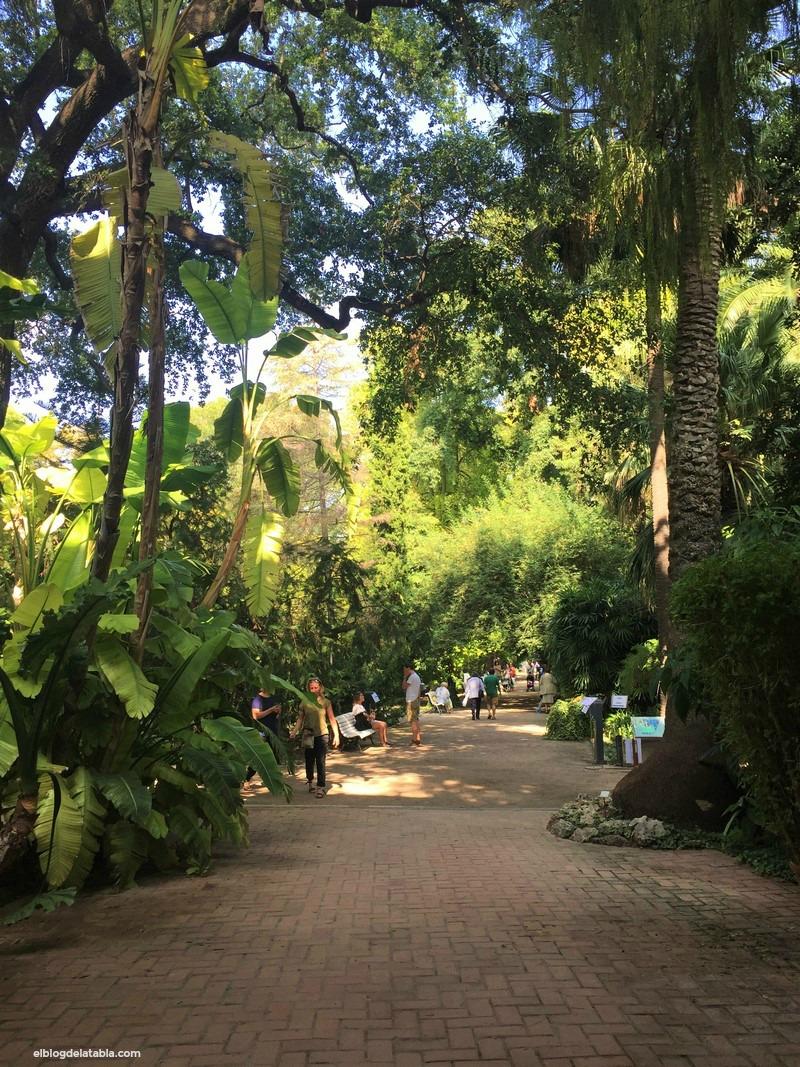 V encuentro de oto o de cactus y suculentas y un paseo por - Jardin botanico valencia ...