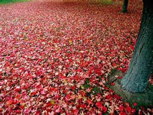 Red trees on the ground