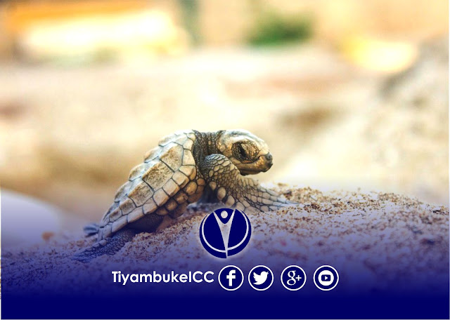 Tiyambuke 2016 - What Sea Turtles Can Teach Us About Our Pursuit Of Finding Our Gifts