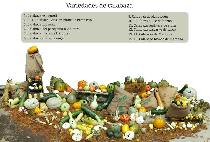 Identificación de variedades de calabaza