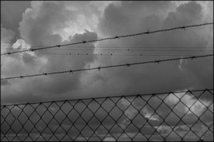 fotografia,pajaros,cable,valla,cielo,limites,serie,arte,fuente_alamo