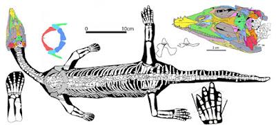 Qianxisaurus skeleton