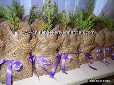 Sırma Bora Nikah Çamı İzmir 5