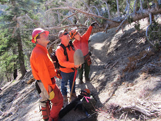 Trailbuilders removing a deadfall on Mt. Islip Trail