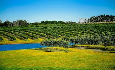 Pomar irrigado no Uruguay ao Sul do Brasil