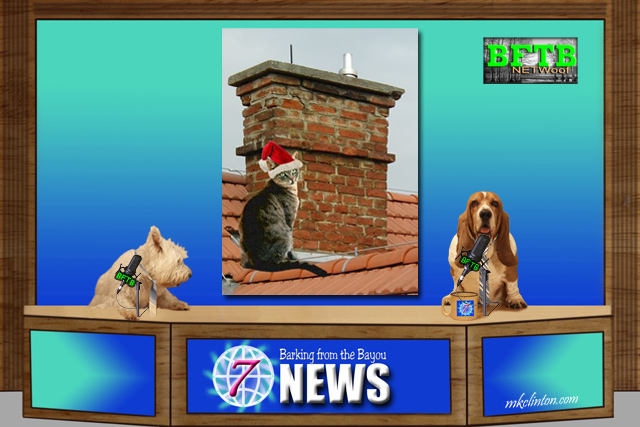 BFTB NETWoof News report on cat stuck in chimney